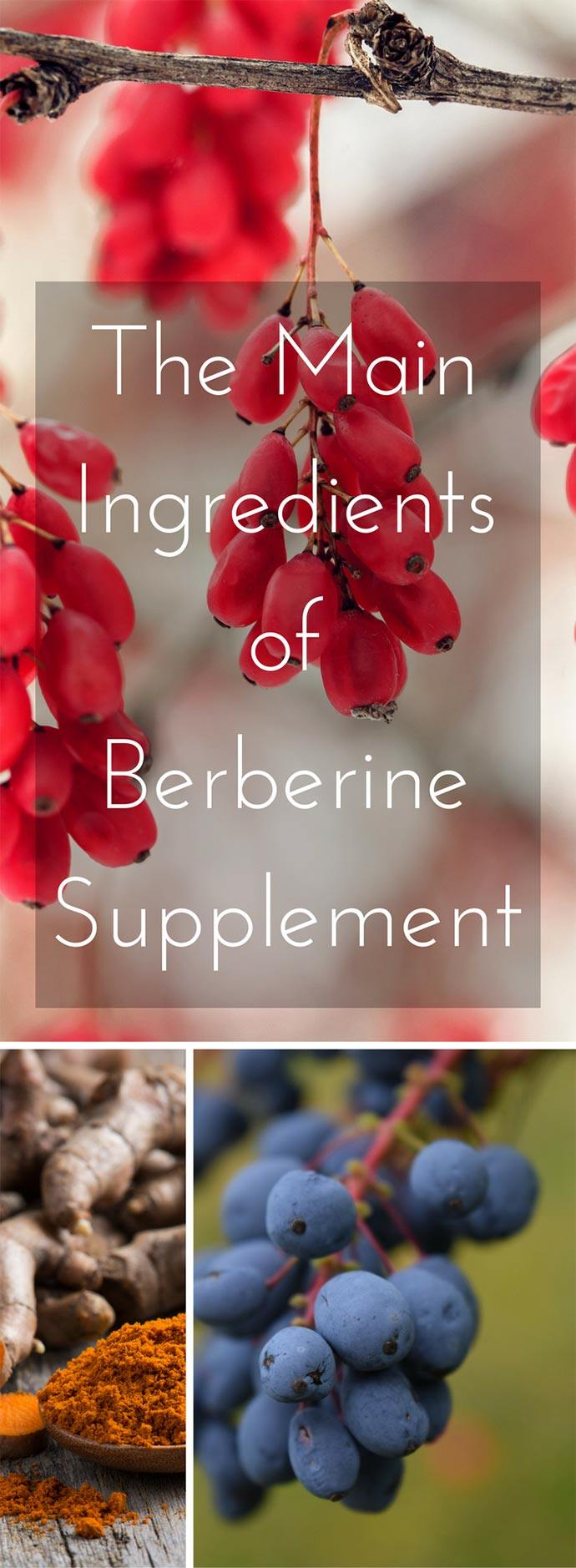 main components of berberine supplement: barberry, Oregon grape, and turmeric tree