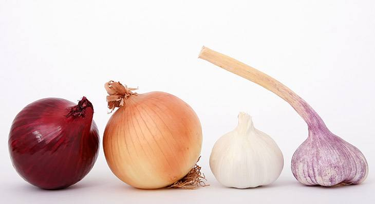 onions and garlic atherosclerosis