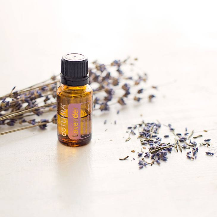 Lavender Essential Oils for Poison Ivy