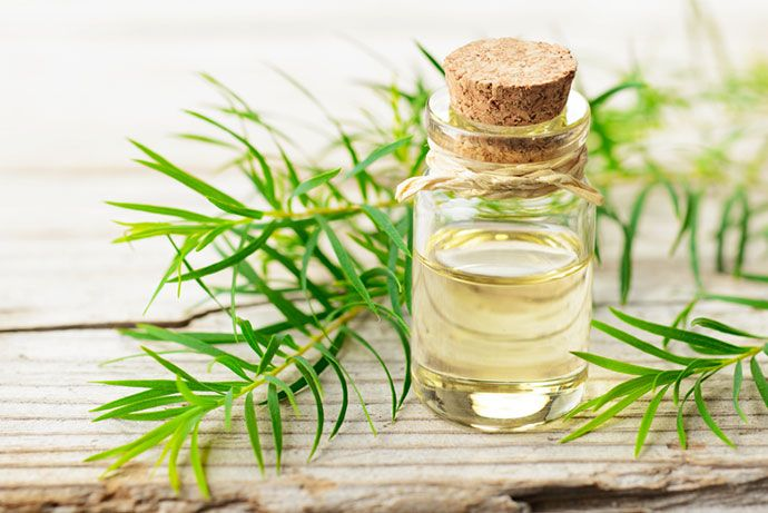 Cystic Acne Treatments: Tree Oil Treatment